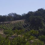 Hidden Wineries of Paso Robles – East and West