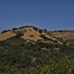 The New California Wine – A Book Review