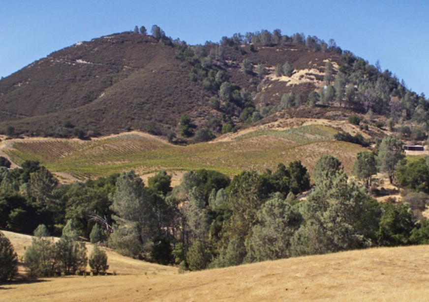 This is the Mt. Harlan Chardonnay vineyard.