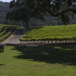 California Wine Appellation Specialist – So What?