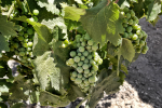 2014 Wine Bloggers Conference – Paso Robles Excursion Day 2