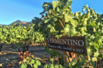Troon Vermentino Vineyard